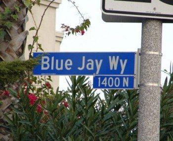 BlueJayWay